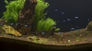 Tank Problems