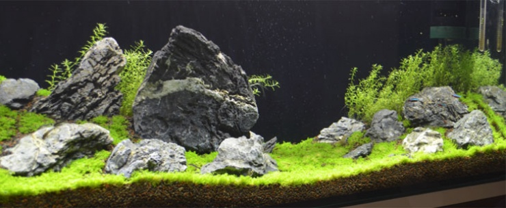Purchasing and Transporting Your Plants for a Freshwater Aquarium