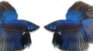 Fish Problems
